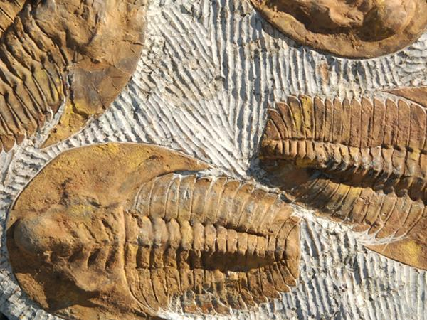 The Growing Threat of Business 'Fossilisation'